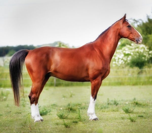 Basic Biomechanics – Understanding Horse Movement