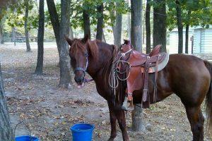 annabelle saddled